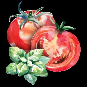tomato basil illustration